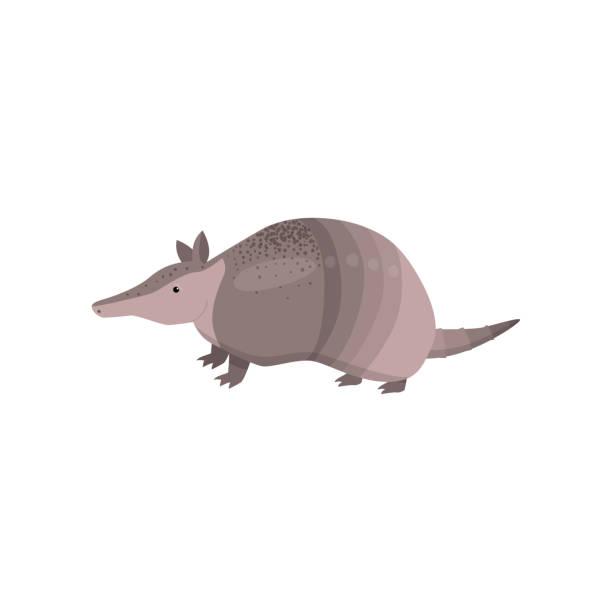 ilustrações de stock, clip art, desenhos animados e ícones de banded armadillo transparent isolated on white background - natureza close up