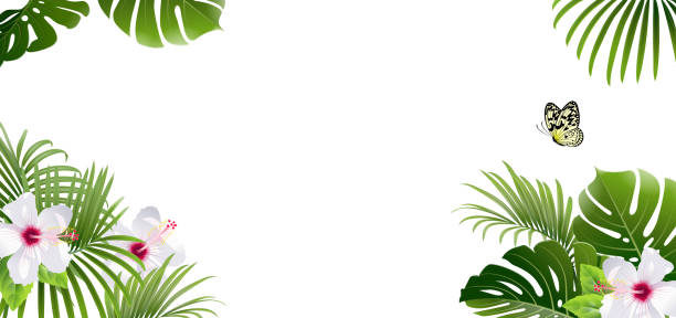 banner of tropical plants and butterfly - jungle stock illustrations