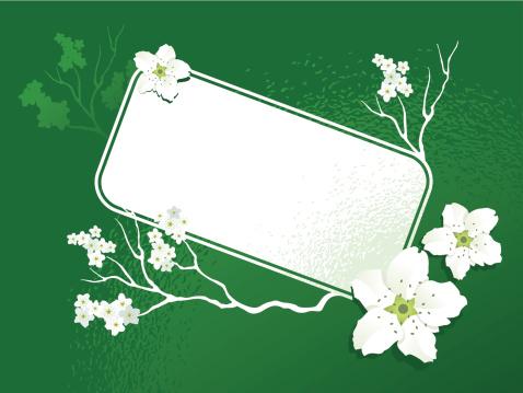 banner sakura