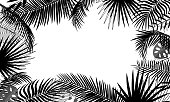 Banner template with tropical leaves, palm branches, monstera. Tropical poster with black outline drawing on a white background. Floral border, jungle concept, frame with place for text. Vector plant