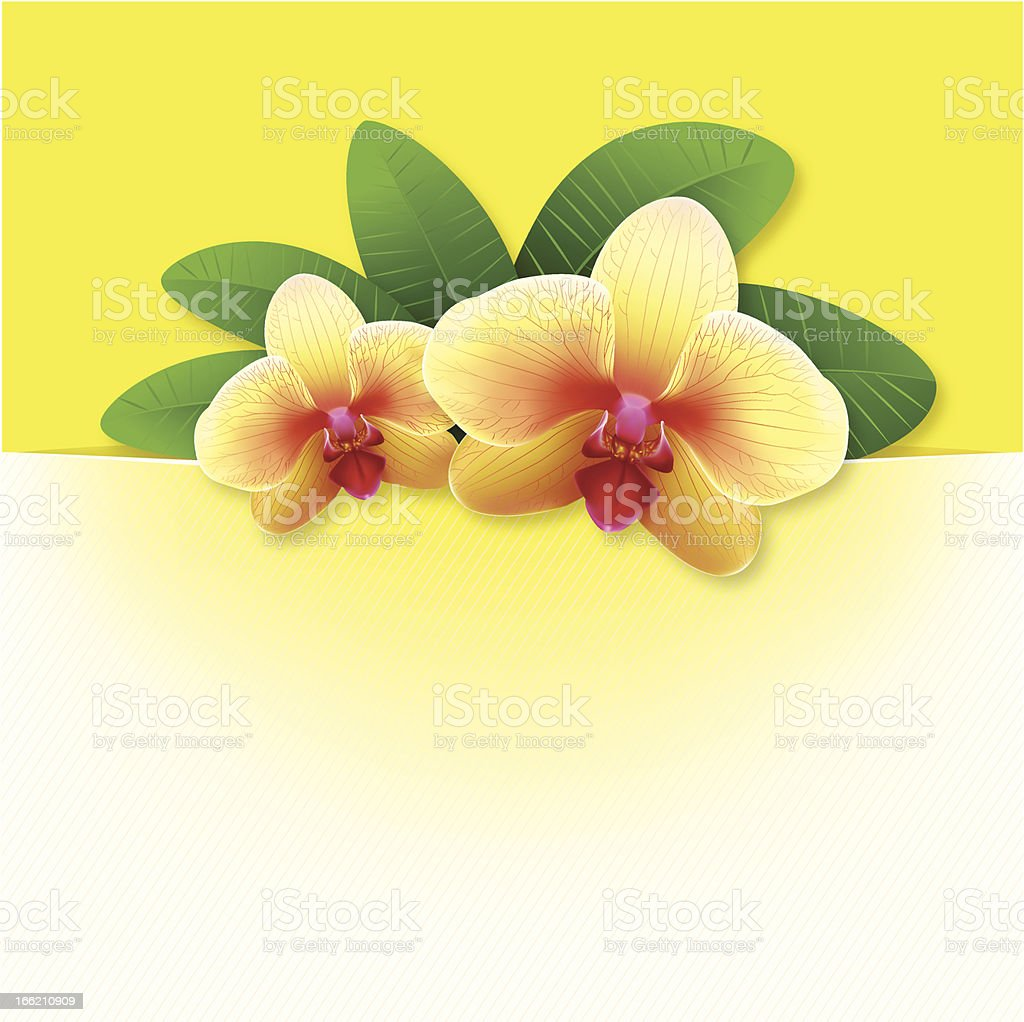 banner with orchids, floral vector background royalty-free banner with orchids floral vector background stock vector art & more images of abstract