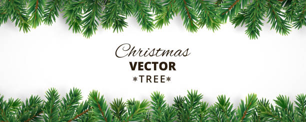 illustrations, cliparts, dessins animés et icônes de banner with vector christmas tree branches and space for text. - en sapin