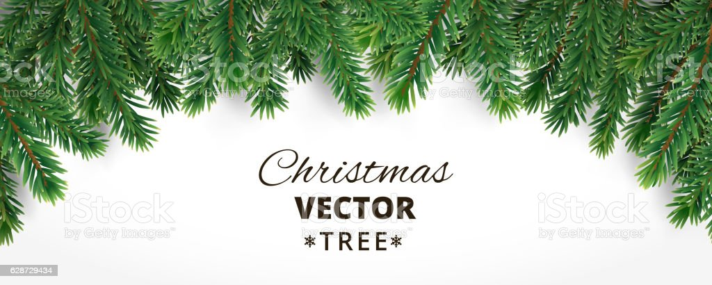 Banner With Vector Christmas Tree Branches And Space For Text Stock Illustration - Download ...