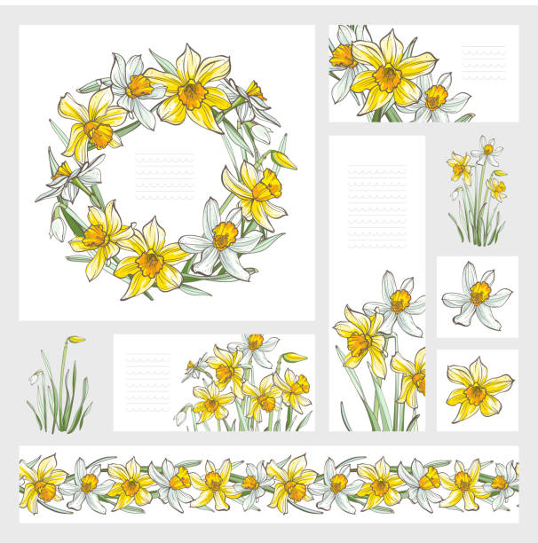 Banners - Daffodil flowers, isolated on white background. Hand-drawn illustrations. Image for design projects daffodil stock illustrations
