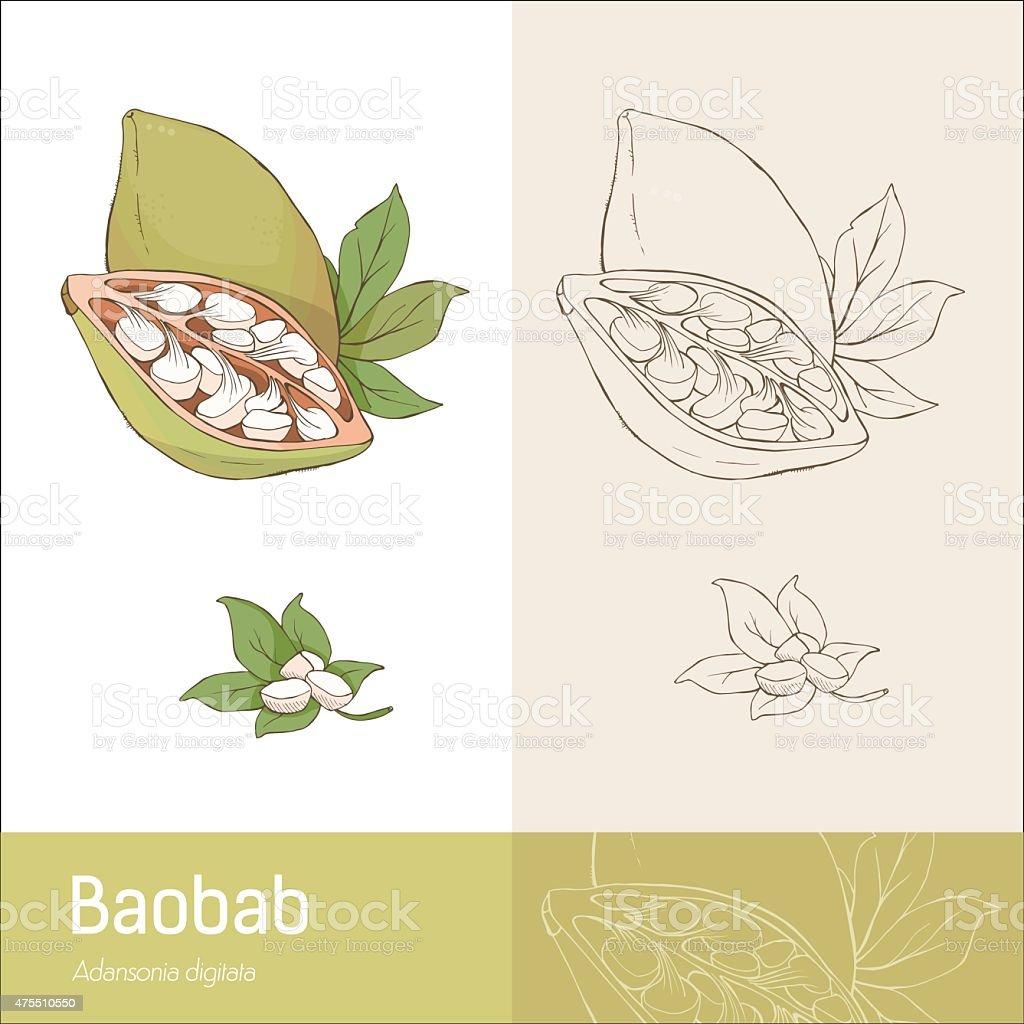 Baobab fruit vector art illustration