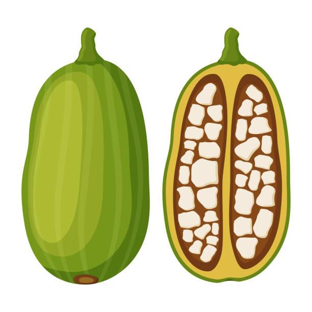 Baobab, nutrición orgánica, fruta exótica de desintoxicación. Dibujos animados de estilo plano. Ilustración de vector - ilustración de arte vectorial