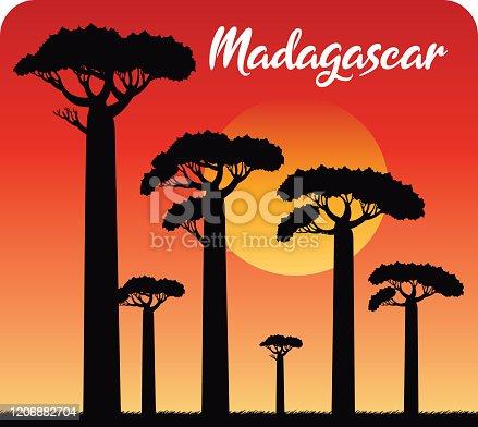 istock Baobab Tree, Baobab Avenue, Madagascar 1206882704