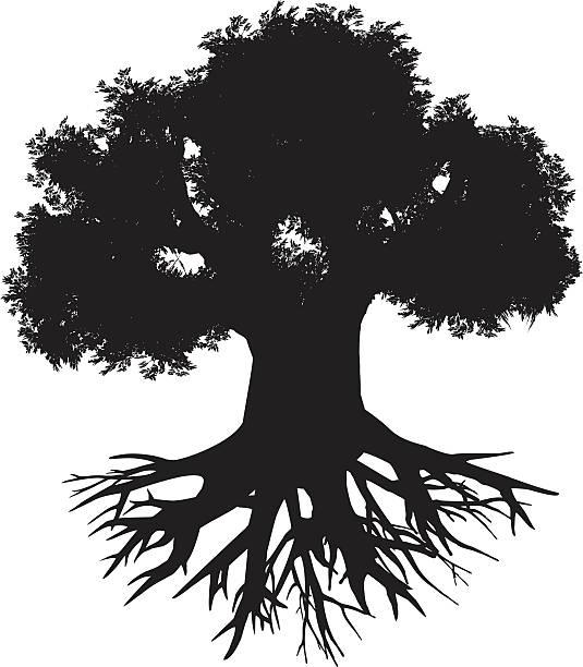 Baobab - ilustración de arte vectorial