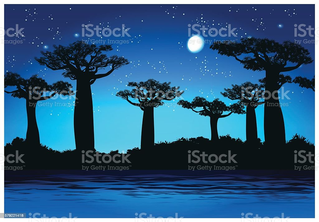 Baobab trees At night vector art illustration