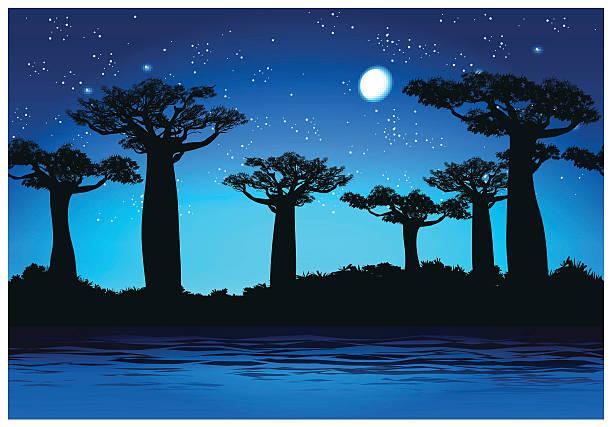 Baobab trees At night - ilustración de arte vectorial