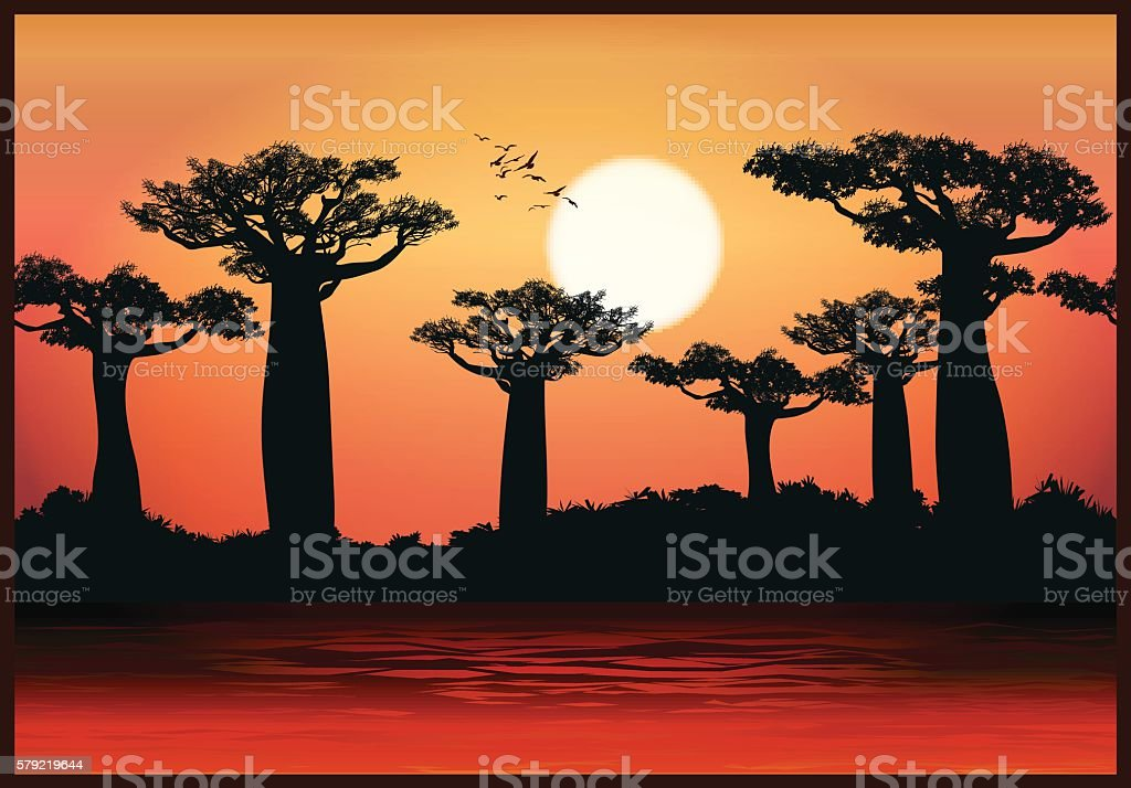 baobab trees vector art illustration