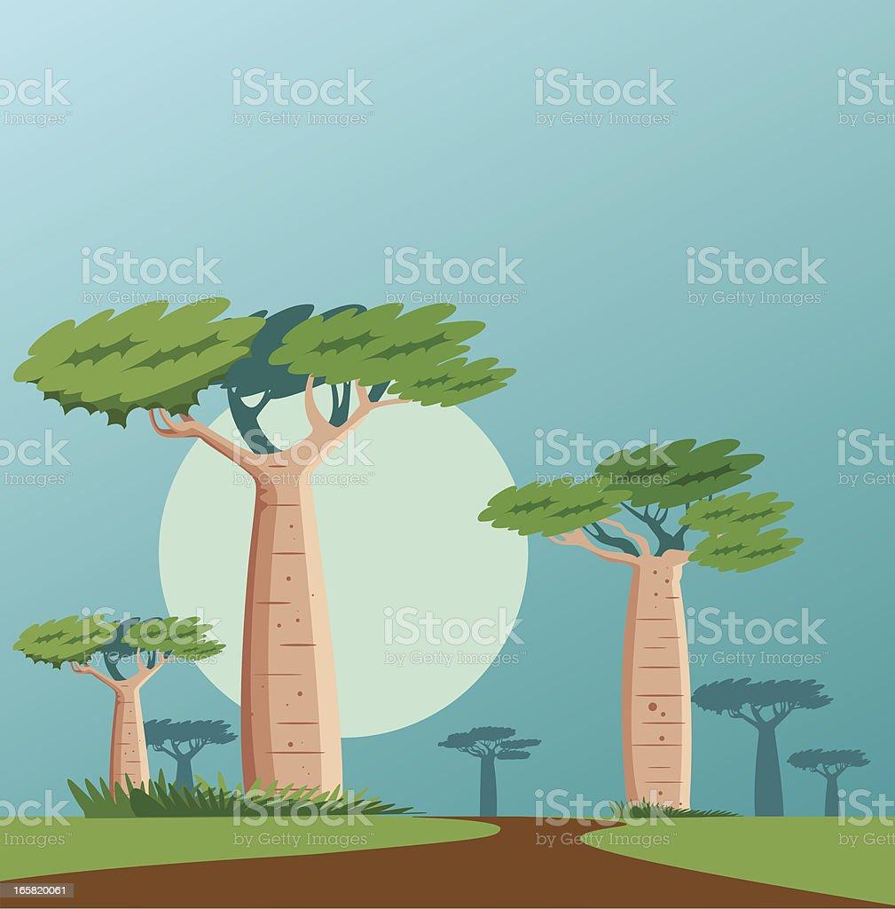 baobab vector art illustration
