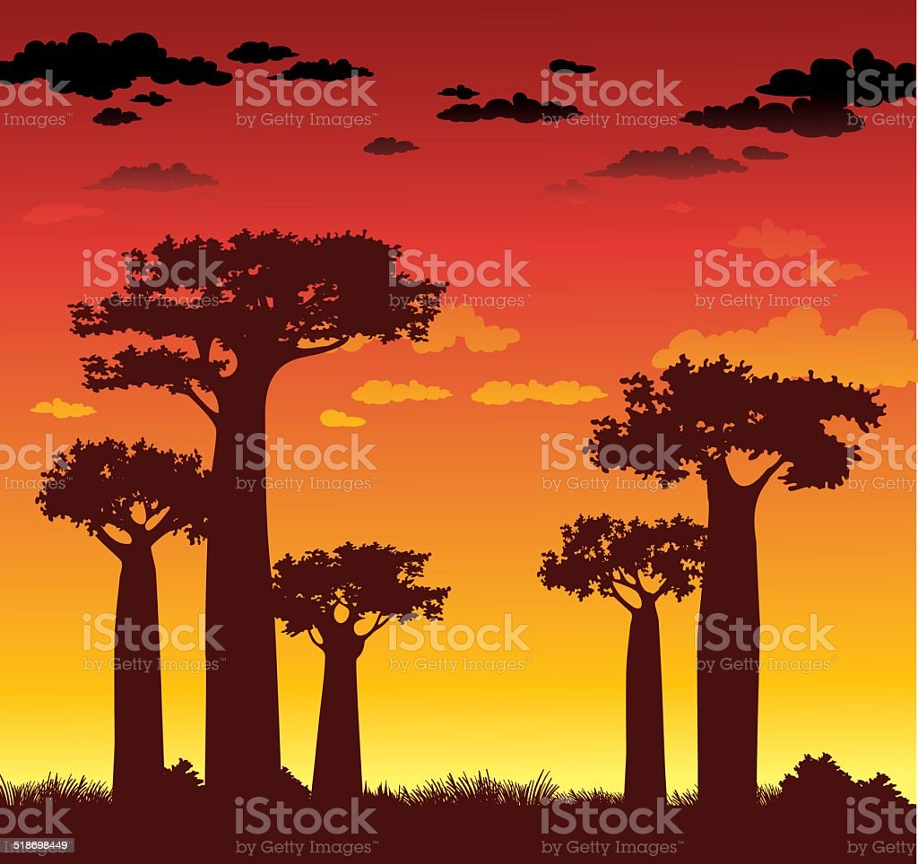 Baobabs and sunset. Madagascar. vector art illustration