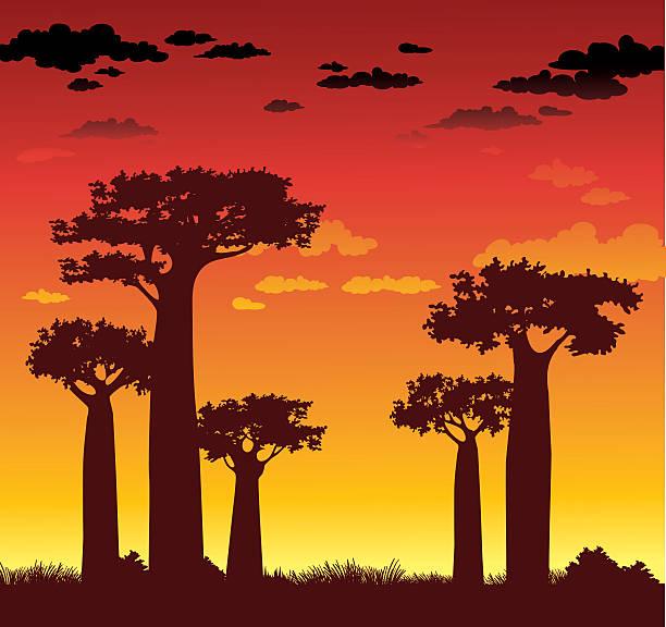 Baobabs y la puesta de sol.  Madagascar. - ilustración de arte vectorial
