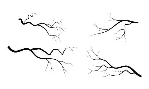 kahlen ast set vektor-symbol-icon-design. - winterruhe stock-grafiken, -clipart, -cartoons und -symbole