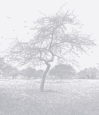 Bare Tree and footpath
