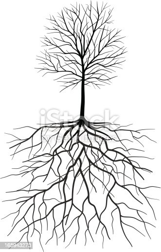 bare tree silhouette with roots illustration stock vector