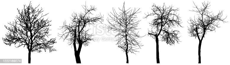 Bare trees (chestnut tree, apple tree, cherry tree), set of silhouette. Vector illustration