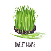 Barley grass vector logo in flat style. Isolated object. Superfood Barley grass medical herb. Vector illustration.