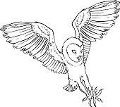 Barn Owl, Tyto alba,