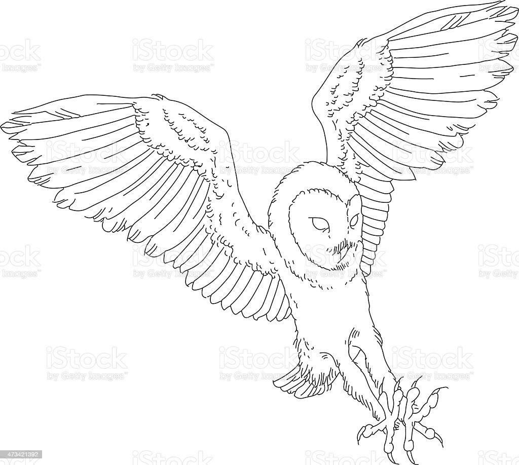 Barn owl -向量藝術插圖