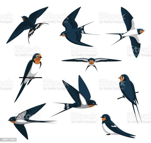 Barn swallow flying cartoon vector illustration vector id939570680?b=1&k=6&m=939570680&s=612x612&h=shwesg2foeyesbwm9dolklshi9bhwaq0qxlnxgjojtw=