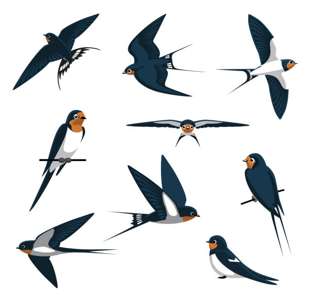 barn swallow flying cartoon vector illustration - birds stock illustrations