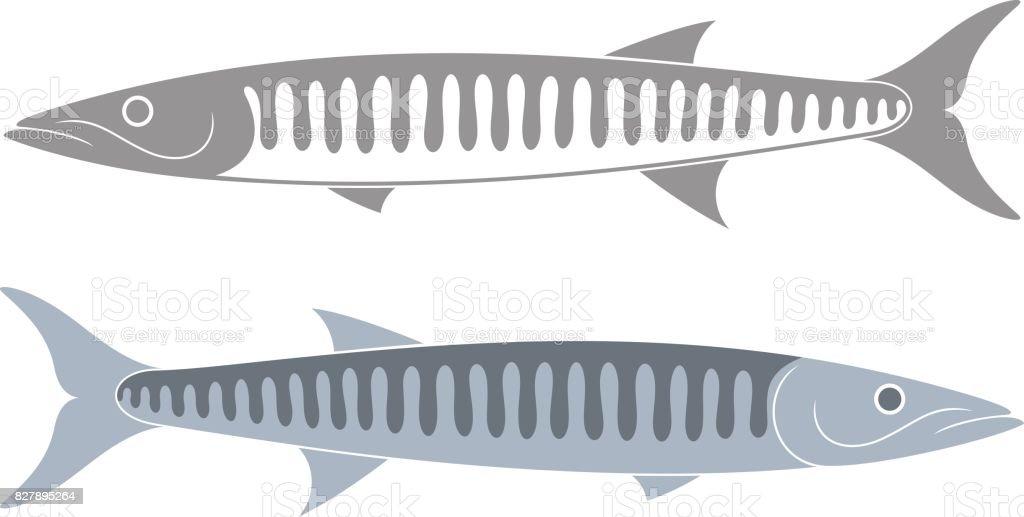 Barracuda set. Isolated barracuda on white background vector art illustration