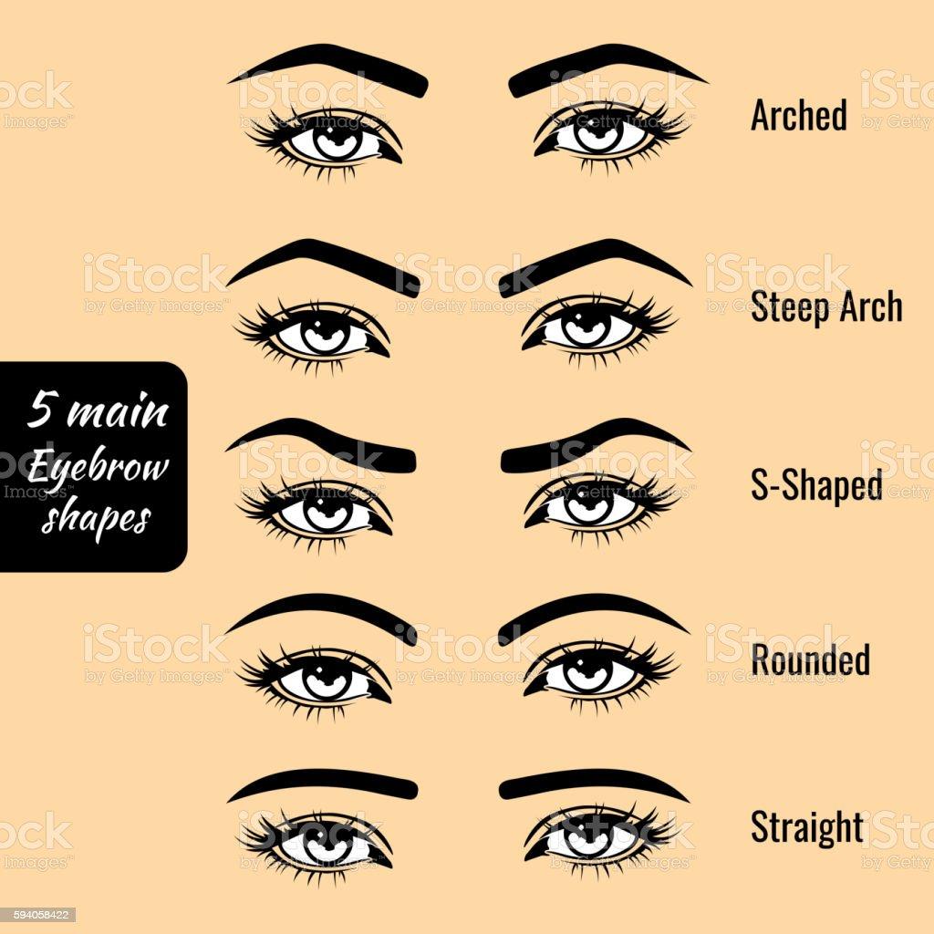 Basic eyebrow shape types vector illustration – Vektorgrafik