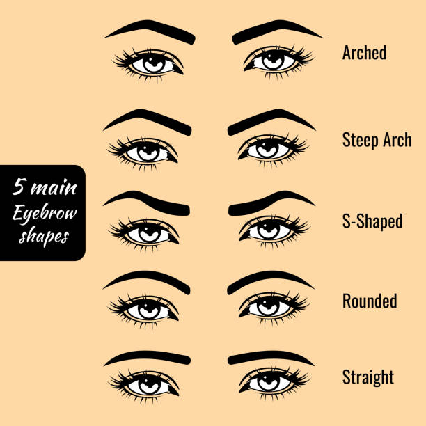 Royalty Free Eyebrows Clip Art Vector Images Illustrations Istock