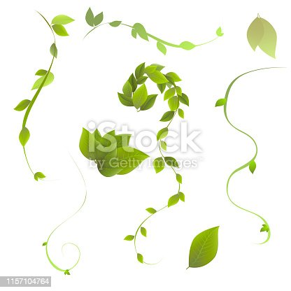 set of leaves and twigs, vector