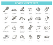 Vector collection with various kind of root vegetables