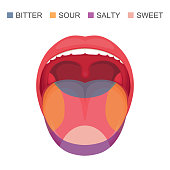 basic taste areas on human tongue, sour, sweet, bitter and salty. sense zone