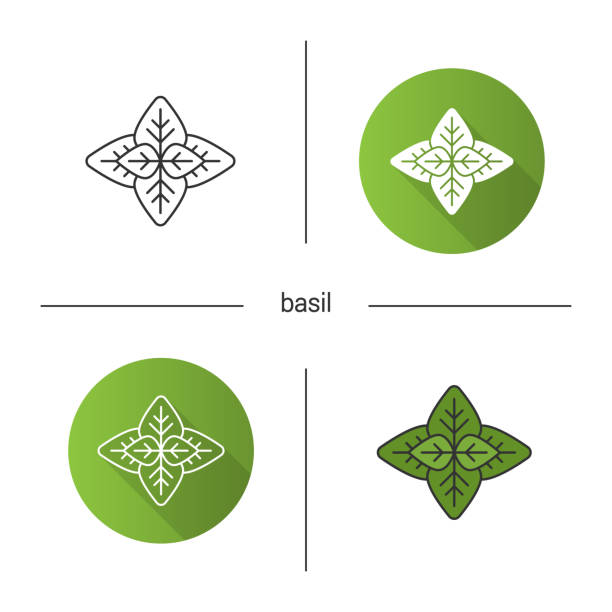 Basil icon Basil flat design, linear and color icons set basil stock illustrations