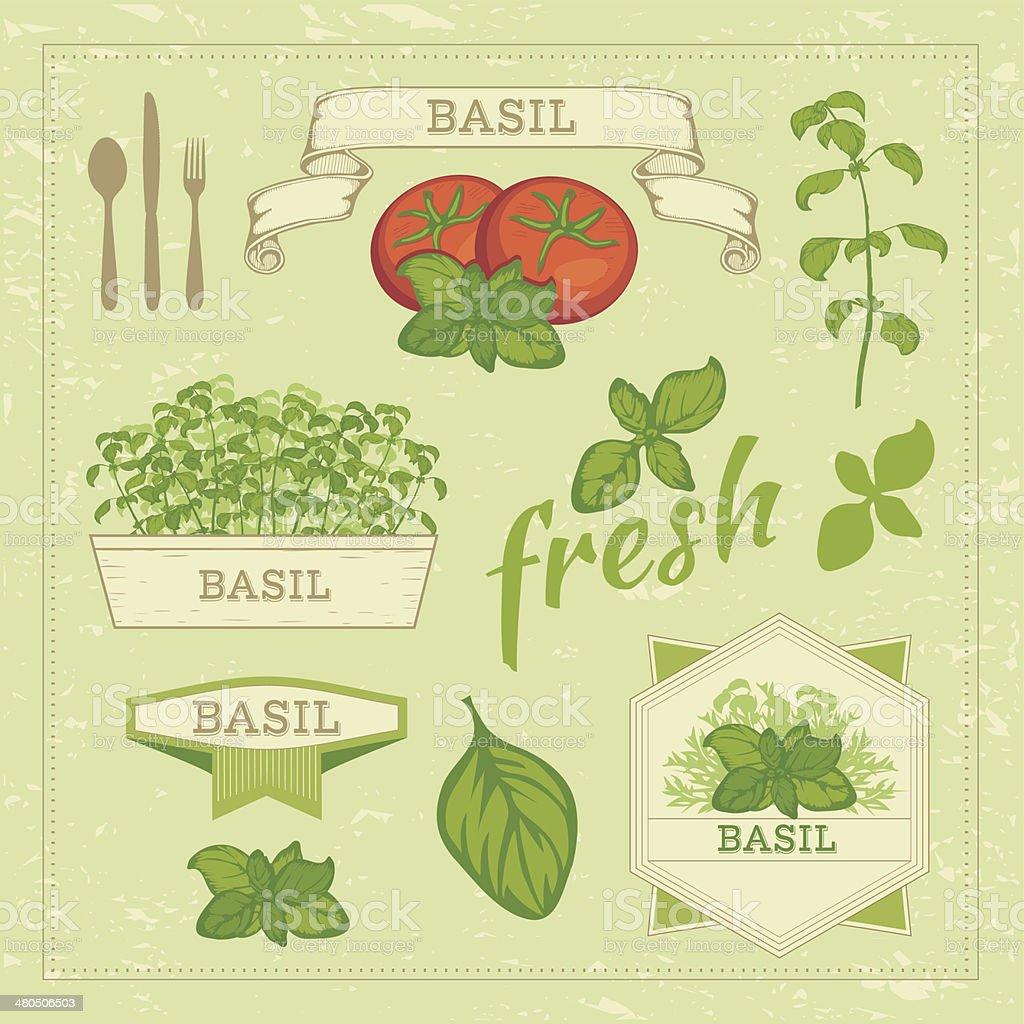 basil leaves and tomato vector art illustration