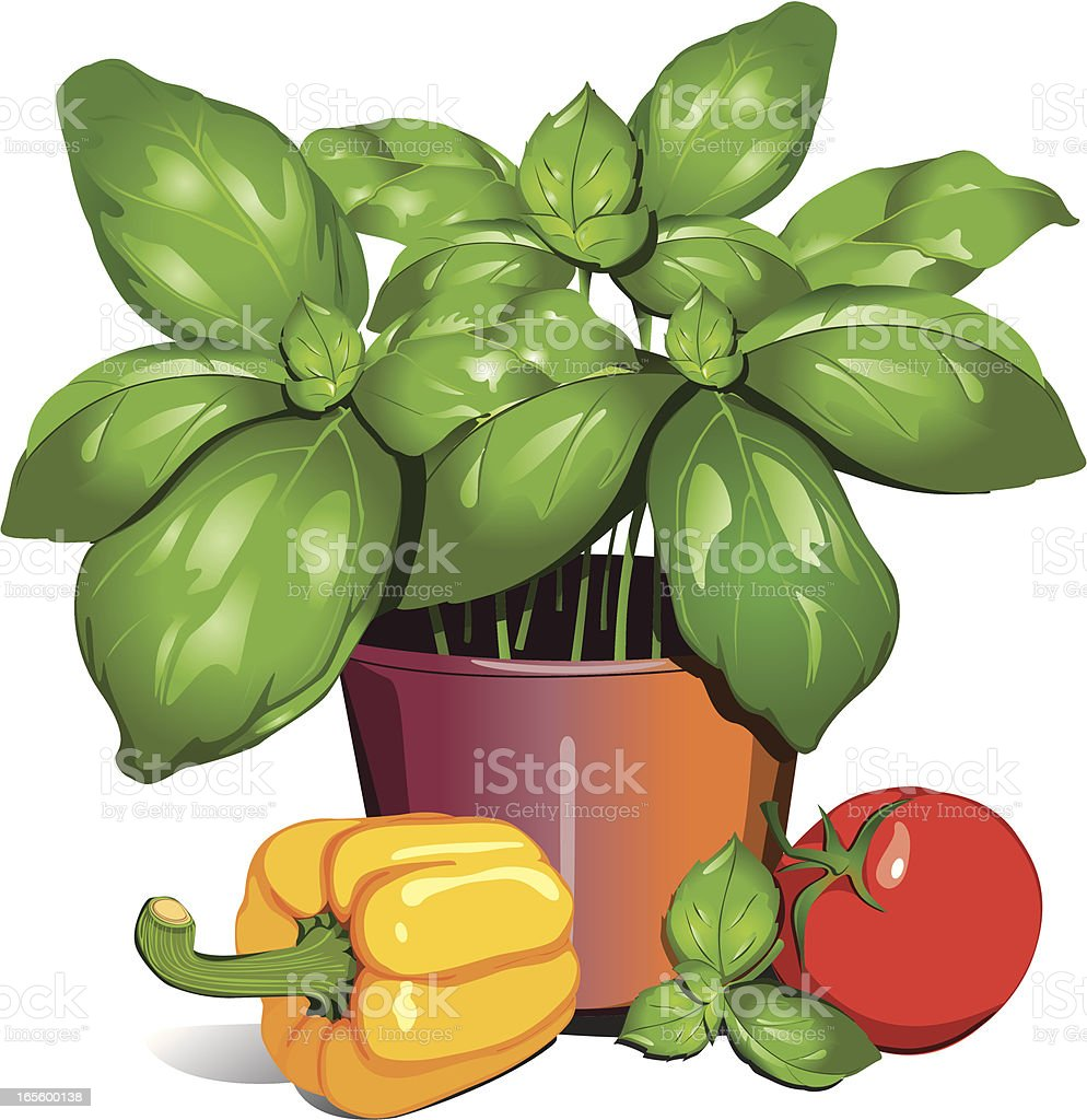 Basil pot with paprika and tomato vector art illustration