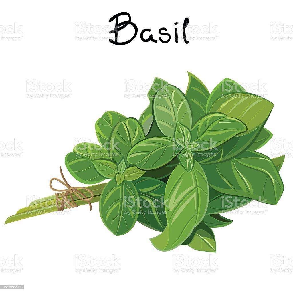 Basil Sprig vector art illustration