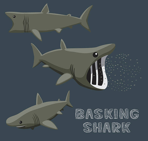 Basking Shark Cartoon Vector Illustration vector art illustration
