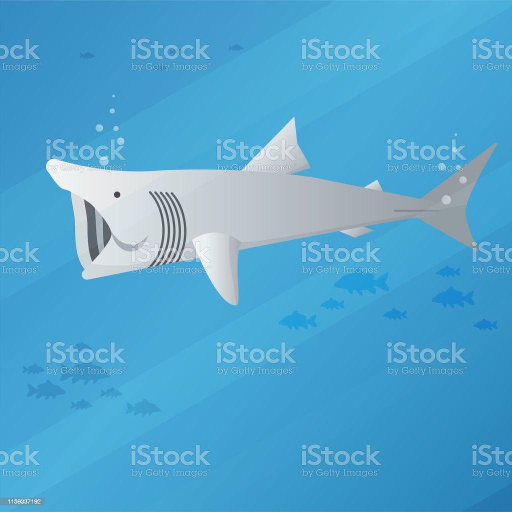 basking shark basking shark vector illustration style. Animal stock vector