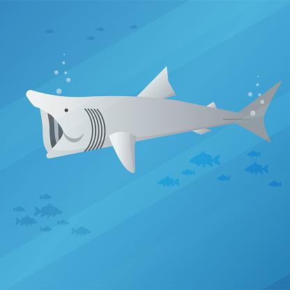 Basking Shark Stock Illustration - Download Image Now