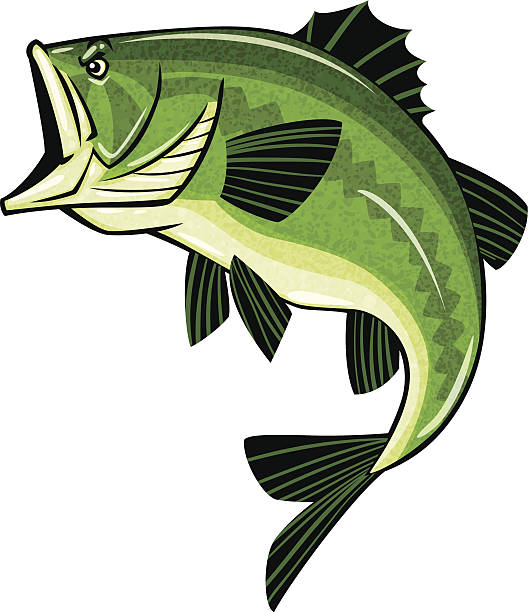 Smallmouth Bass Clipart