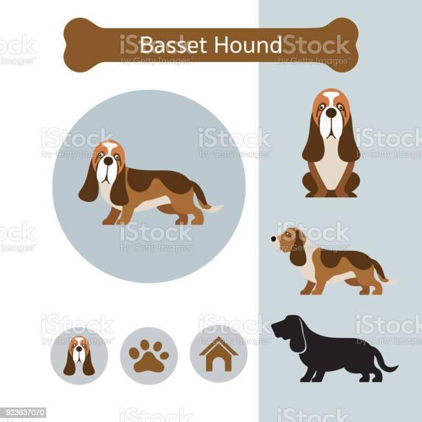 Basset hound dog breed infographic vector id933637070?b=1&k=6&m=933637070&s=612x612&h=g dez faqdrcfjby pbttsqqeucqgau3ckj7aatvxfi=