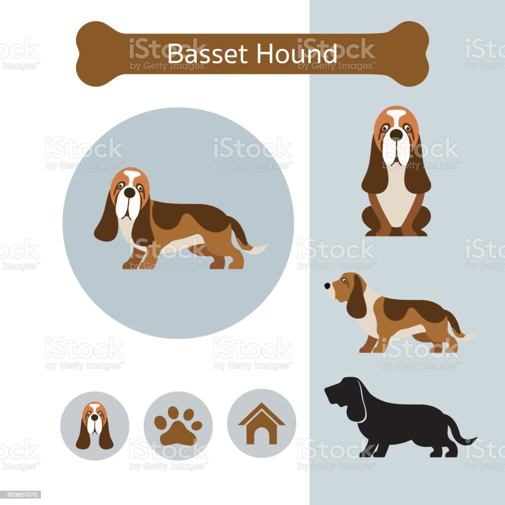 royalty free basset hound clip art vector images illustrations rh istockphoto com Basset Hound Silhouette Clip Art basset hound face clipart