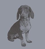 Engraving illustration of a Basset Hound dog in animal shelter hoping to be adopted