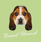 Basset Hound Dog.