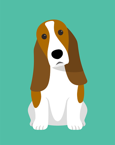 Basset Hound is sitting waiting for taking a picture.