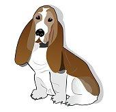 Basset hound isolated drawing on white background.