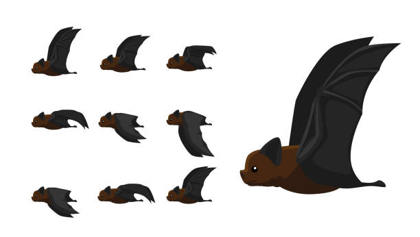 Bat Flying Motion Sequence Animation Cartoon Vector Illustration Animal Motion Sequence EPS10 File Format bat stock illustrations