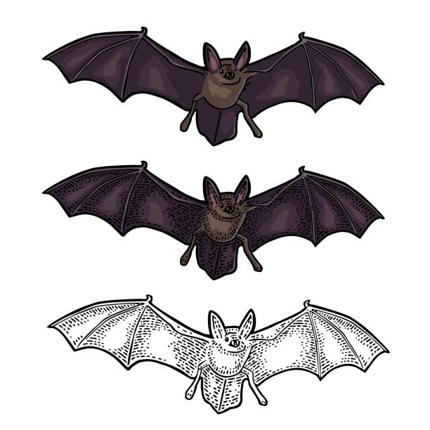 bat flying with scary face. vector black vintage engraving - bat stock illustrations, clip art, cartoons, & icons
