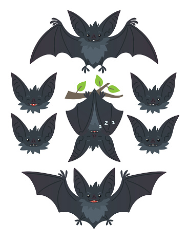Bat in various poses. Flying, hanging. Grey bat-eared snouts with different emotions. Illustration of modern flat animal emoticons on white background. Cute mascot emoji set. Halloween smiley. Vector